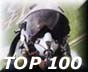 AVIATION TOP 100 www.avitop.com